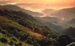 Regenwaldabholzung auf Rekordtief
